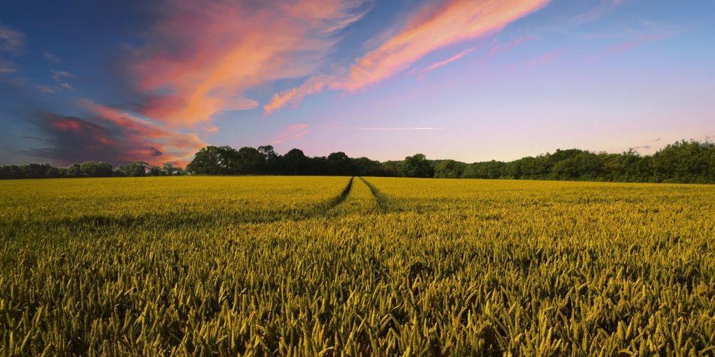 Recrutare personal agricultura